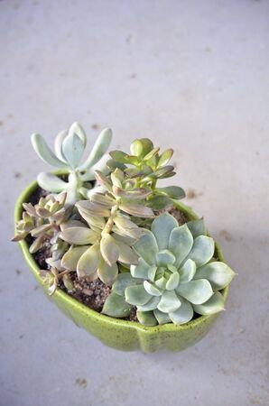 Pot of Assorted Succulents Banco de Imagens