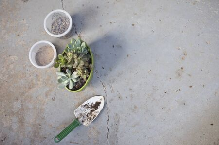 Potted Succulents with Small Shovel and Containers of Sand and Pebbles