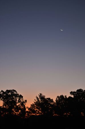Dawn/Dusk Sky with Dark Trees and Moon Banco de Imagens