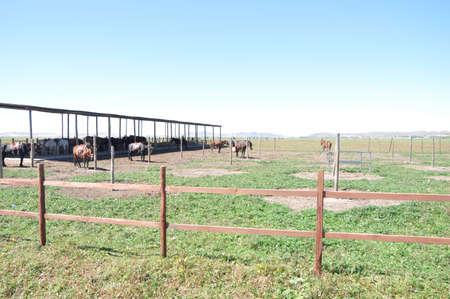 Ma Rong, Inner Mongolia Grassland
