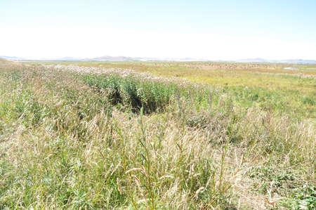 Autumn grassland Imagens