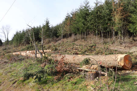 Cutting of wood, logging, town Valsonne, department of Rhone, France
