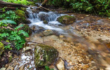 thru: River flowing thru forest, Forest creek flowing thru forrest Stock Photo
