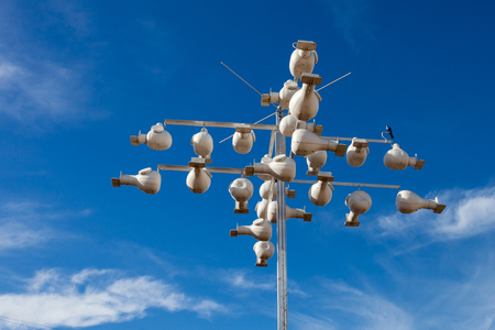 Purple Martin (Progne subis) nests made by environmentalist in the Hill Country, Texas to help preserve the rare swallow species