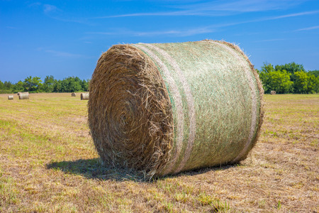 Freshly mowed field with round hay bales with blue sky in the background Stock fotó