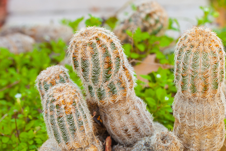 Small cactus which look like penis