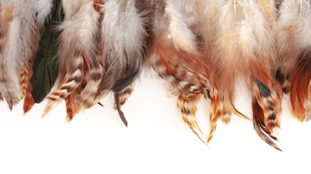 Colorful feather texture on whitebackground with copu space