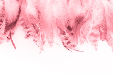 Trendy pink coral feather texture background