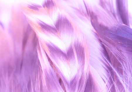 Violet-purple feathers background with texture. Light, soft focus. Delicate fluffy background