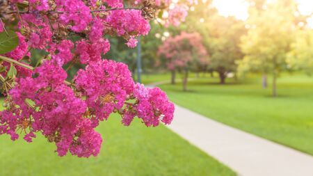 Panoramic scene of beautiful city park with blossoming pink flowers