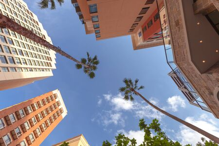 Low angle view of a tall  buildings and palm trees with blue sky in background. Vacation location wallpaper