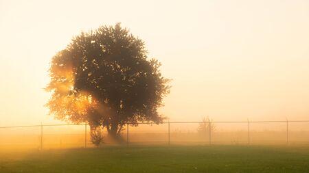 Sun rays shining thru tree in a foggy field at sunrise Фото со стока