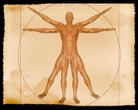 musculature: Illustration - Muscle Man Stock Photo