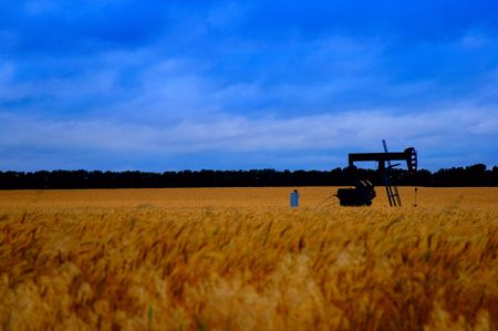 oilfield: Nature - Oil Pump in Field