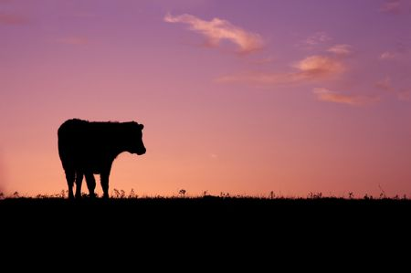 Animal - Cow Silhouette