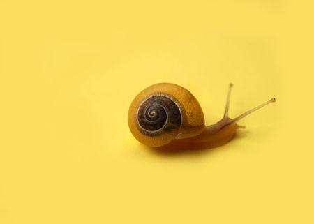 노란색 달팽이