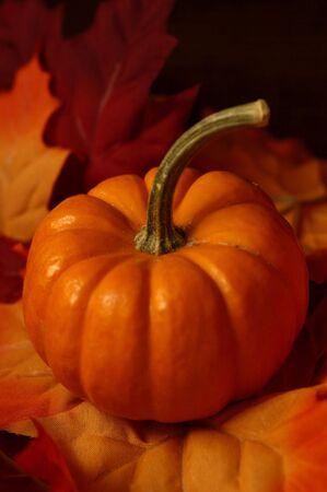 Fall Pumpkin Imagens