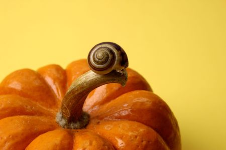Snail on Pumpkin Banco de Imagens