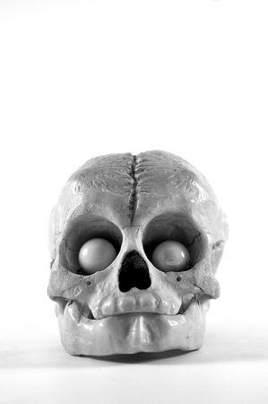 jawbone: Object - Animal Skull