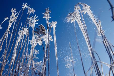 冬のシーン。冷凍花