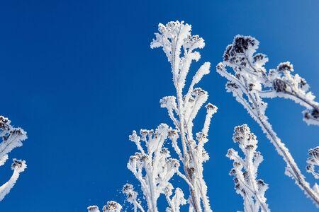 冬のシーン。frozenned 花 写真素材