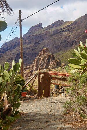 ヤシの木と山、テネリフェ島、カナリア、Masca 村のビュー