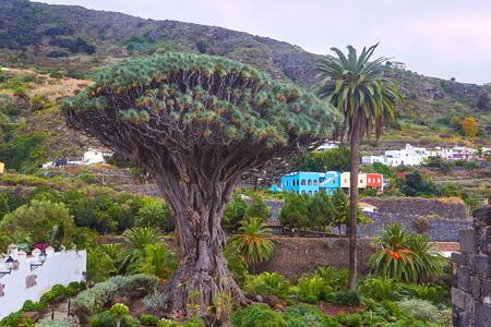 植物園と有名な千年木ドラゴン表示します。