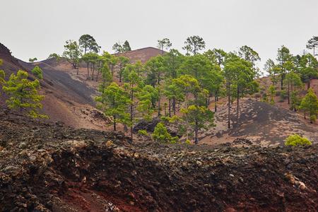 テネリフェ島のエル ・ テイデ国立公園
