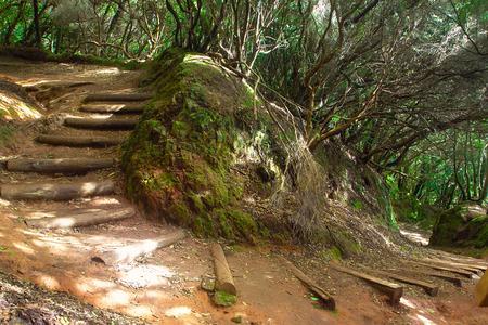 テネリフェ島、スペインの亜熱帯林 写真素材