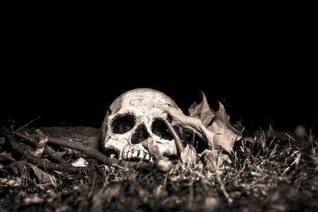 A skull on the ground in the woods; photographed in the dark using light painting Banco de Imagens