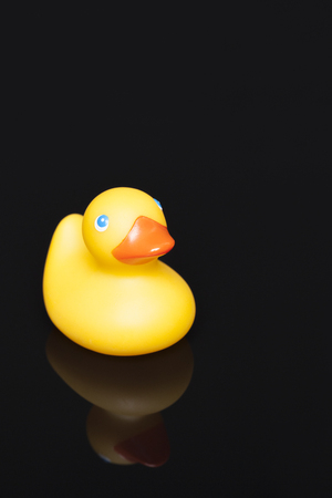 duckie: A yellow rubber duckie is reflected on a shiny black surface