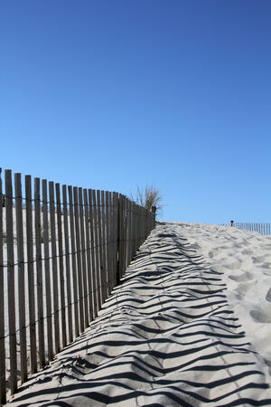 A trail along a sand dune in Cape Henlopen State Park, Delaware photo