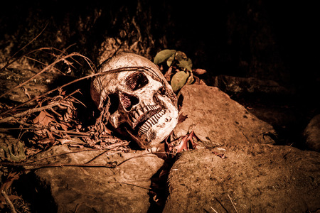 A skull on the ground in the woods; photographed in the dark using light painting 免版税图像