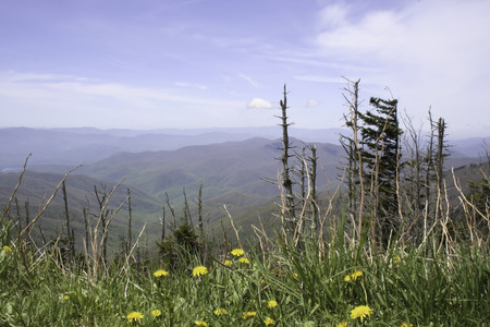 A beautiful view of the Smoky Mountains in Tennessee with grasses and flowers in the foreground and a blue sky Фото со стока