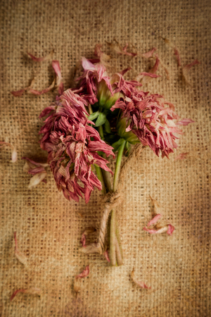 dying: A small bouquet of Dahlias, tied with twine, is dying on a burlap with petals scattered about.