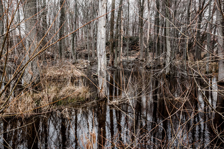 dismal: A creepy swamp forest looks completely dead and dismal. Stock Photo