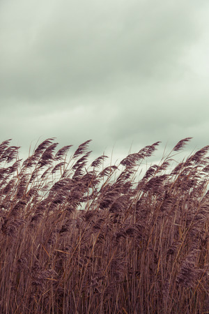 dismal: Grasses blowing in breeze along ocean with dismal sky Stock Photo