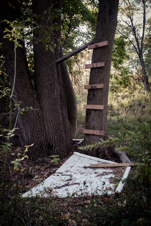suspense: Makeshift tree house in woods Stock Photo