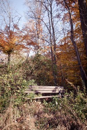 suspenso: banco del parque rota en maderas