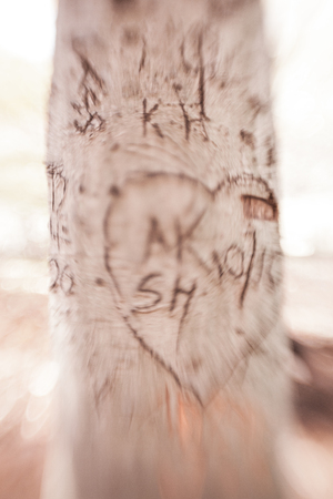 initials: Hearts and initials carved in tree