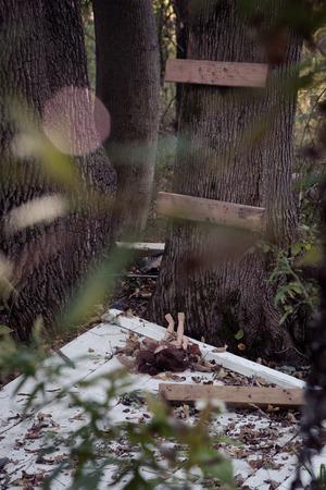 woodland  horror: Doll abandoned by makeshift treehouse