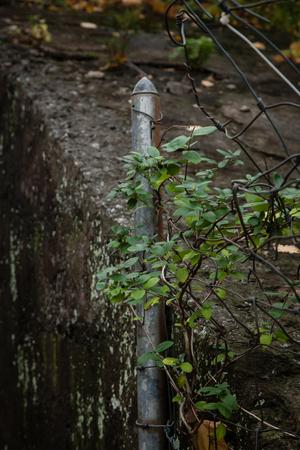 suspenso: Un poste de la valla met�lica de edad con las vides