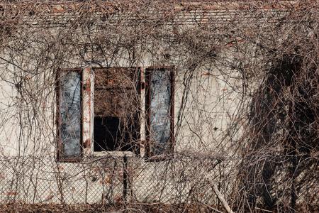 suspenso: Una ventana en una estructura militar, en un estado de decadencia, está cubierta con las vides muertas.