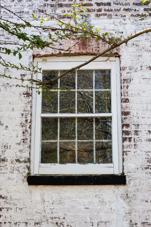 white washed: An old window with glass panes on a white washed brick house. A tree branch frames the photo.