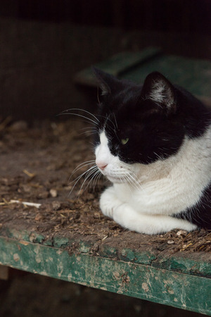 A black and white cat lies inside an old wagon on a farm.