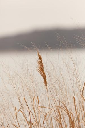 A closeup of sea grass growing alongside the Arthur Kill in Sewaren, New Jersey. Photo taken in April, 2017. Stock Photo