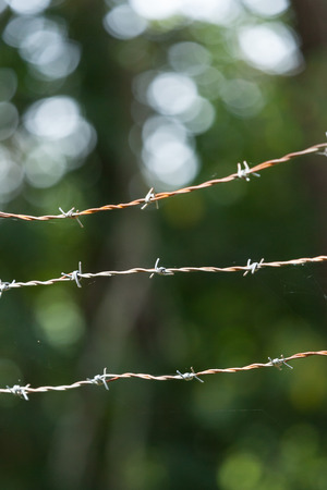 A close up of a barbed wire fence with spider webs 스톡 콘텐츠