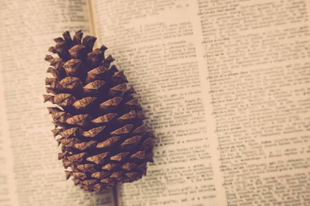 A dry pinecone sits on top of an old vintage dictionary. Stock fotó
