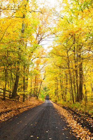 An autumn road of the infamous Cooper Road in Middletown, New Jersey, rumored to be haunted.