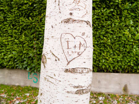 tree with heart engraved with letters I + M and the word love Stock Photo